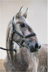 Photo cheval a vendre MONALIZA DE L'GESSE